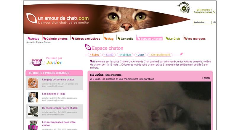 Espace Chaton du site Un Amour de Chat